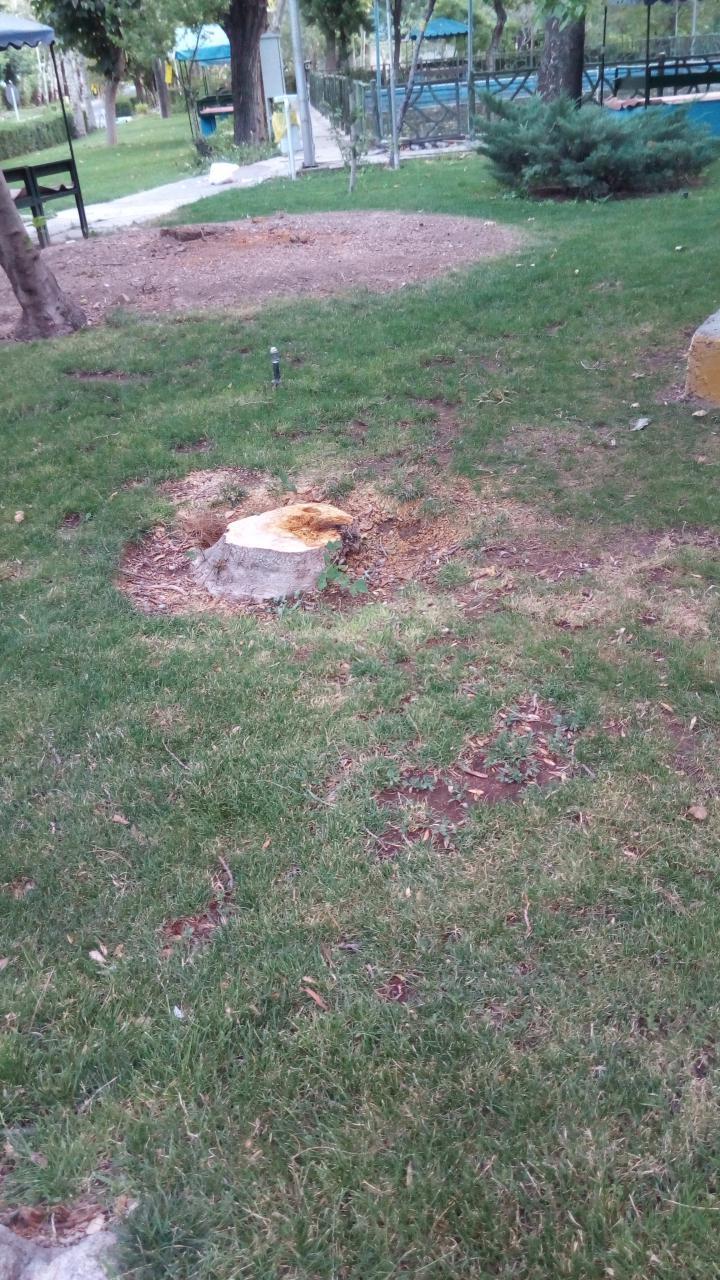 قطع درختان دانشگاه امام صادق