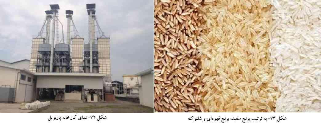 کارخانه پاربویل - برنج سفید - برنج قهوه ای و شلتوک