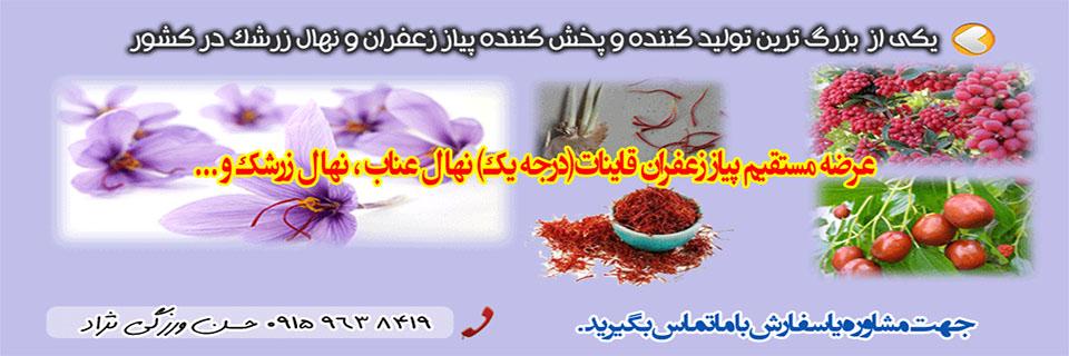 فروش پیاز زعفران