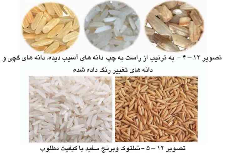 دانه های سالم و آسیب دیده برنج
