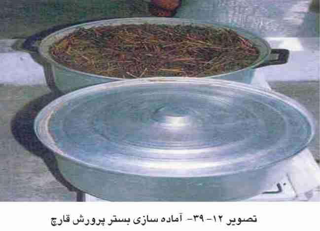 آماده سازی بستر پرورش قارچ