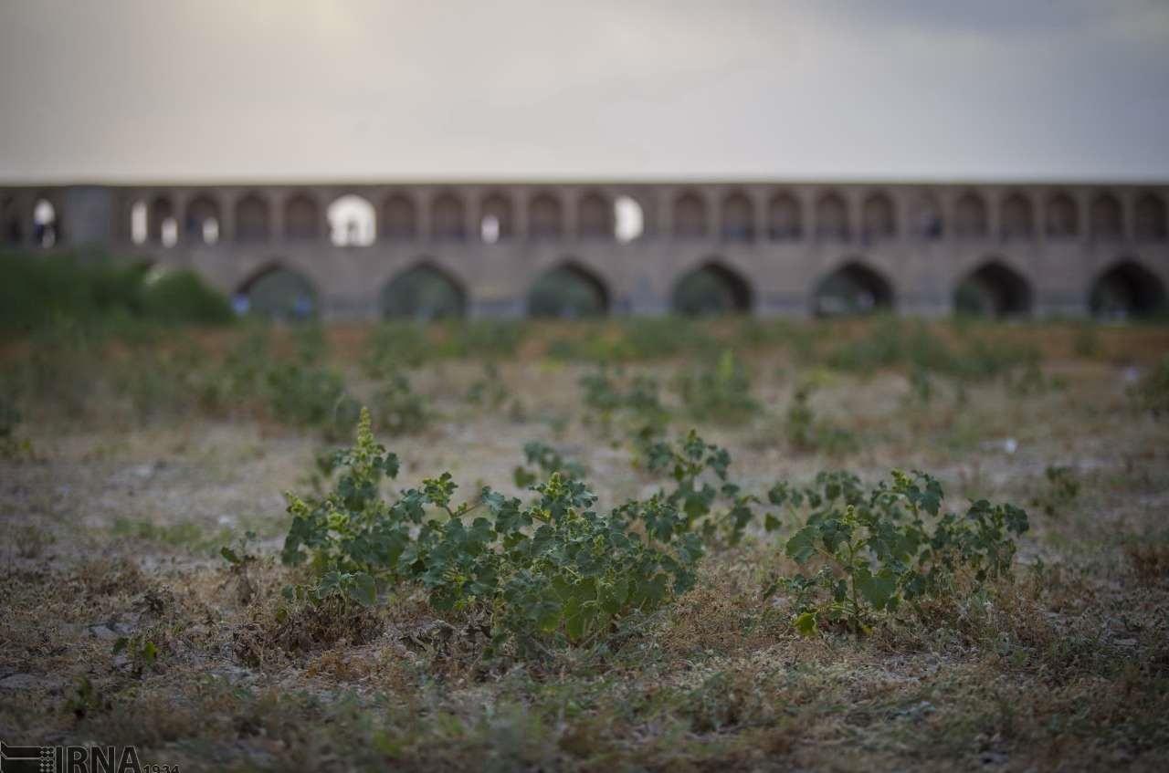 خشکی زاینده رود