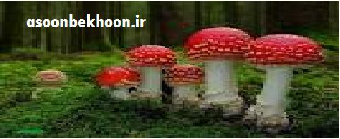 قارچ ها