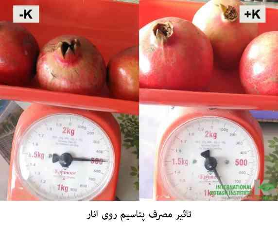 تاثیر مصرف صحیح پتاسیم روی میوه انار