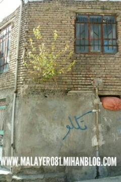 عکس درخت توت در ازندریان ملایر