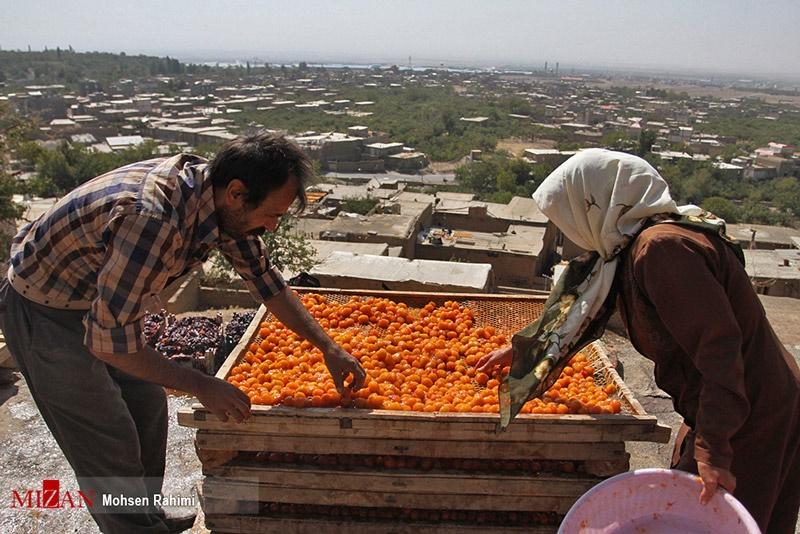 پایتخت آلوهای ایران