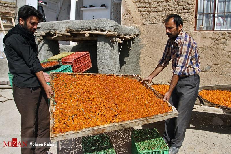 پایتخت آلوی ایران