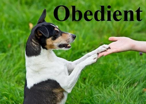 فرمانبر – Obedient – آموزش لغات کتاب ۵٠۴ – English Vocabulary – کدینگ لغات ۵٠۴