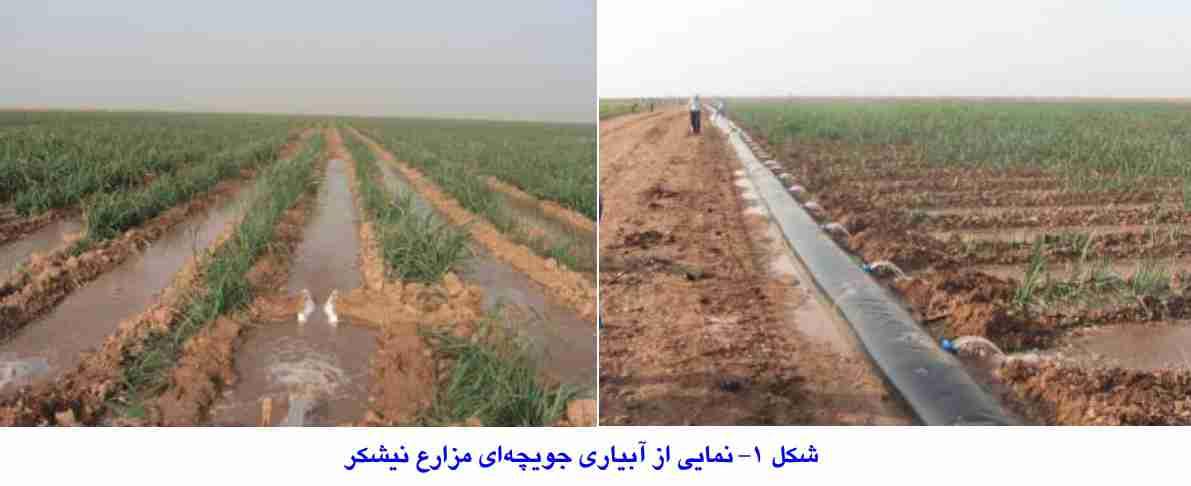 آبیاری جویچه ای در مزارع نیشکر