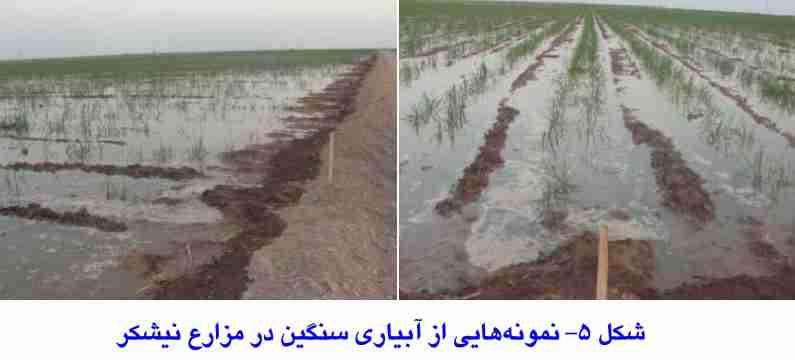 نمونه هایی از آبیاری سنگین در مزارع نیشکر