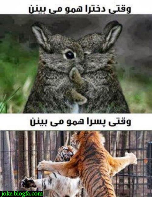 تصویر: http://s9.picofile.com/file/8309998418/funny_picture_best.jpg