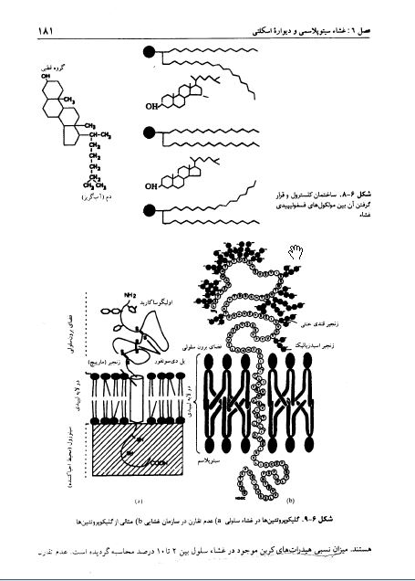 دانلود کتاب زیست شناسی سلولی و مولکولی دکتر مجد و شریعت زاده + نمونه سوالات تستی و امتحانی با جواب + نکات و تست های کنکوری برای آزمون ارشد pdf دانشگاه پیام نور