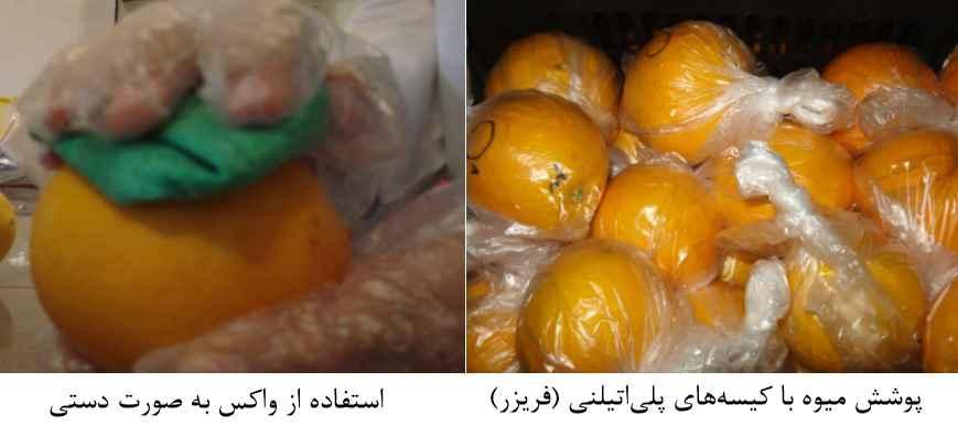 پوشش میوه با کیسه های پلی اتیلنی و استفاده از واکس به صورت دستی