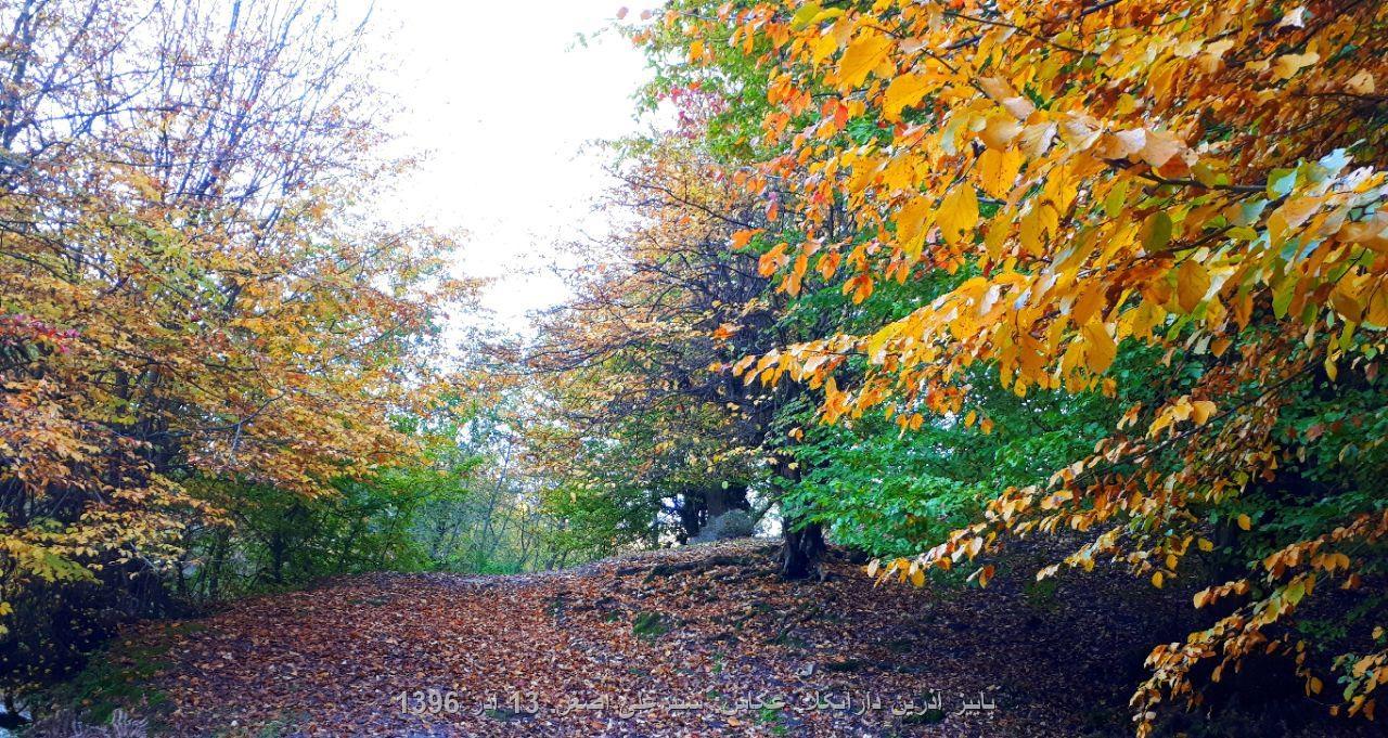 پاییز آذرین دارابکلا