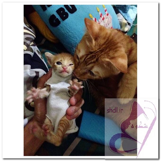 تصویر گربه و بچه گربه