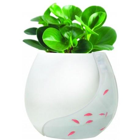 خرید اینترنتی گلدان آکواریوم دیواری خرید آنلاین