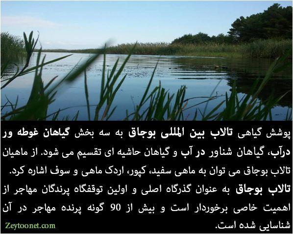 تالاب بوجاق در گیلان