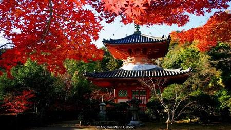 نگاهی به هیروشیما؛ شهری که «صلح و دوستی» صادر میکند