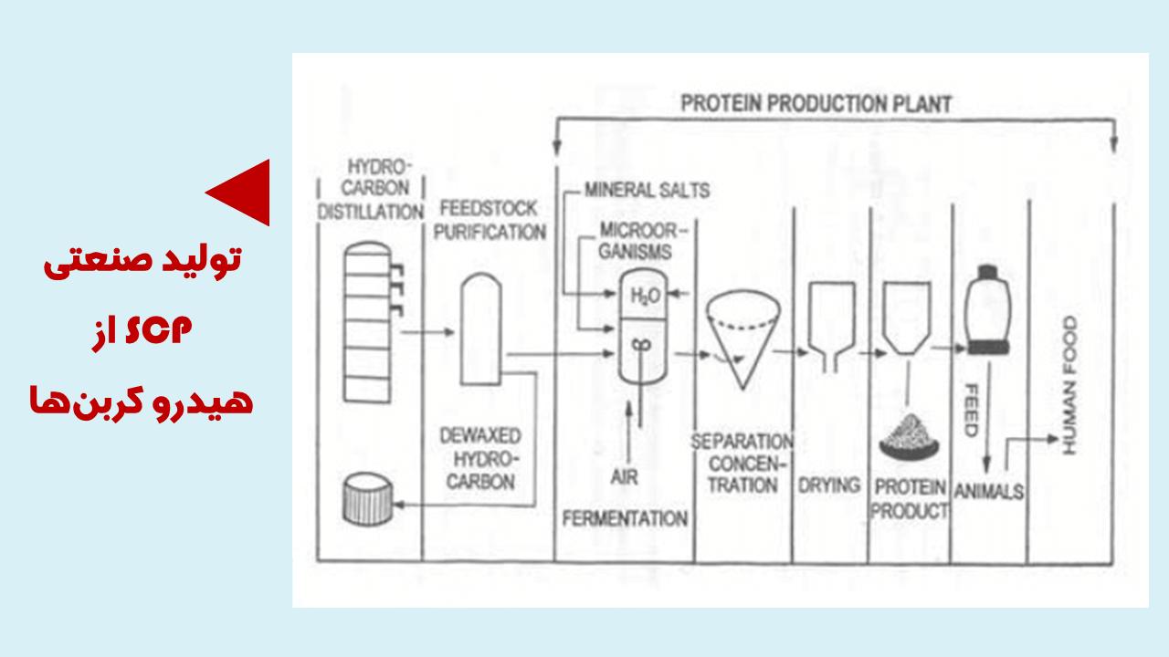 تولید پروتئین تک سلولی از هیدروکربن ها