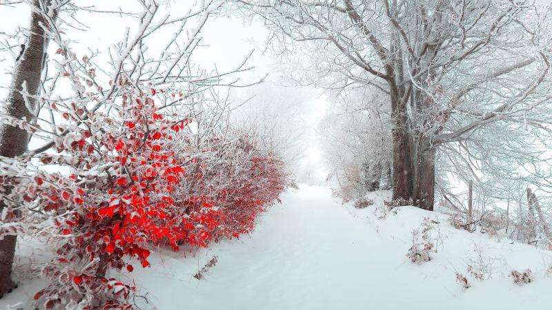 تصاویر زیبای زمستانی