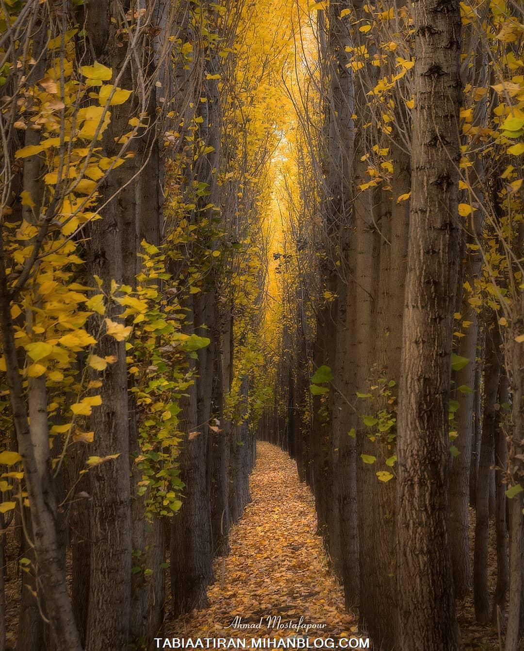 طبیعت حشمت آباد - امید جاوند