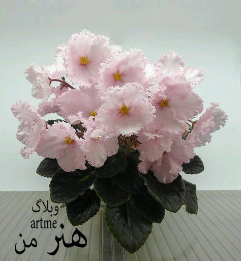 http://s9.picofile.com/file/8319989584/cedf6dbb5017009816878017eaba201b.jpg