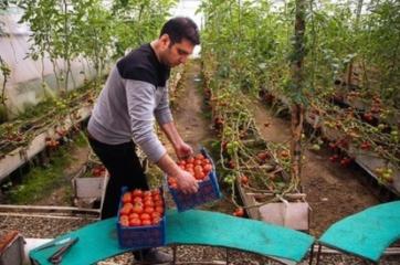 احمد هاشمی گلخانه دار ملایر