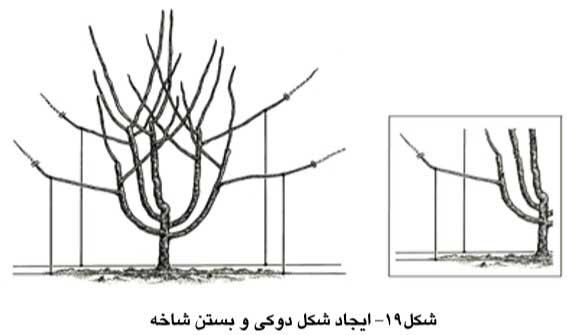 ایجاد شکل دوکی و بستن شاخه