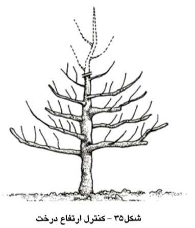 کنترل ارتفاع درخت
