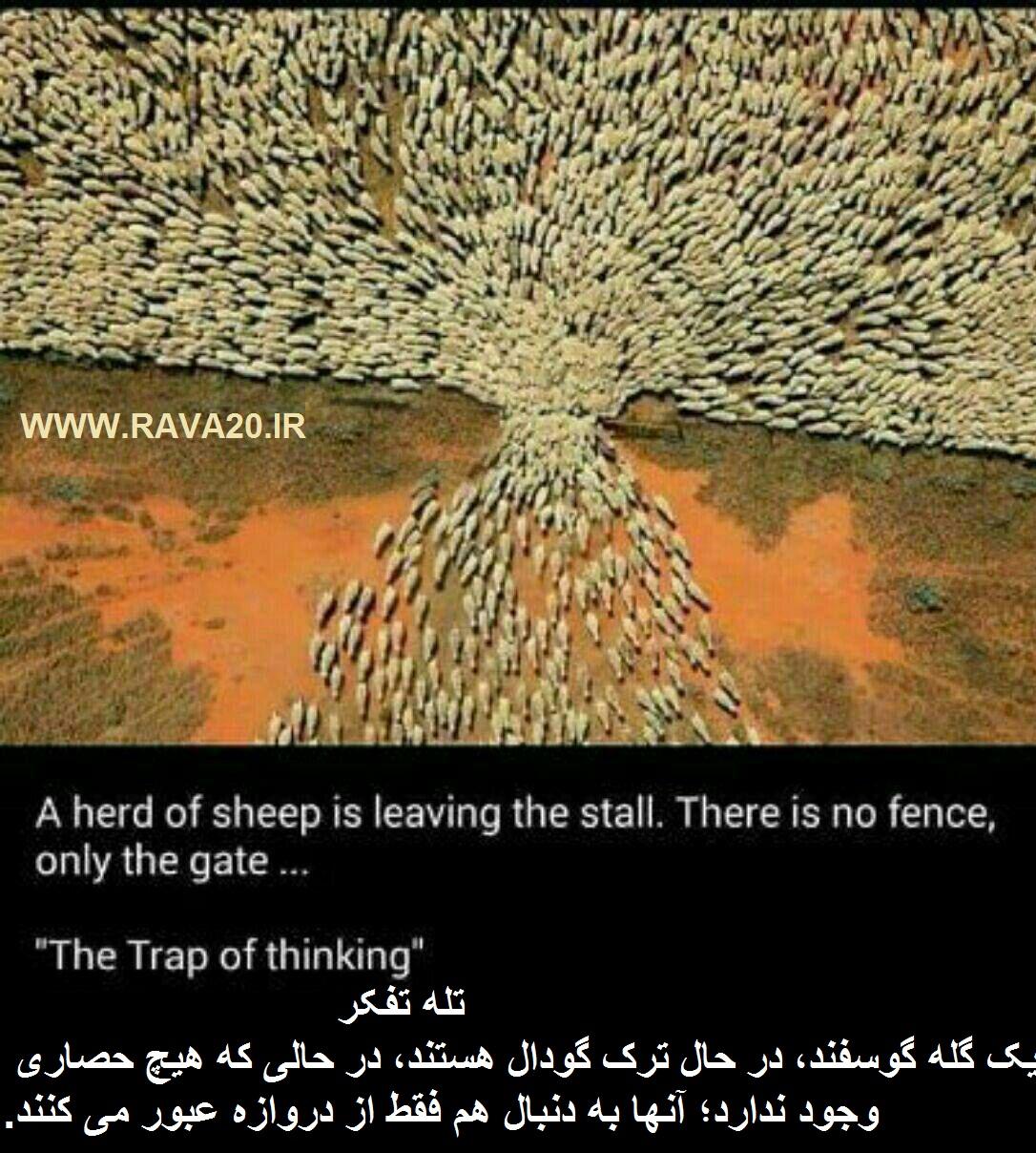 تله تفکر !   یک گله گوسفند، در حال ترک گودال هستند، در حالی که هیچ حصاری وجود ندارد؛ آنها به دنبال هم فقط از دروازه عبور میکنند!