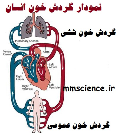 گردش خون ششی و عمومی