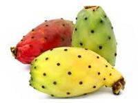 http://s9.picofile.com/file/8325024668/cactus_m.jpg