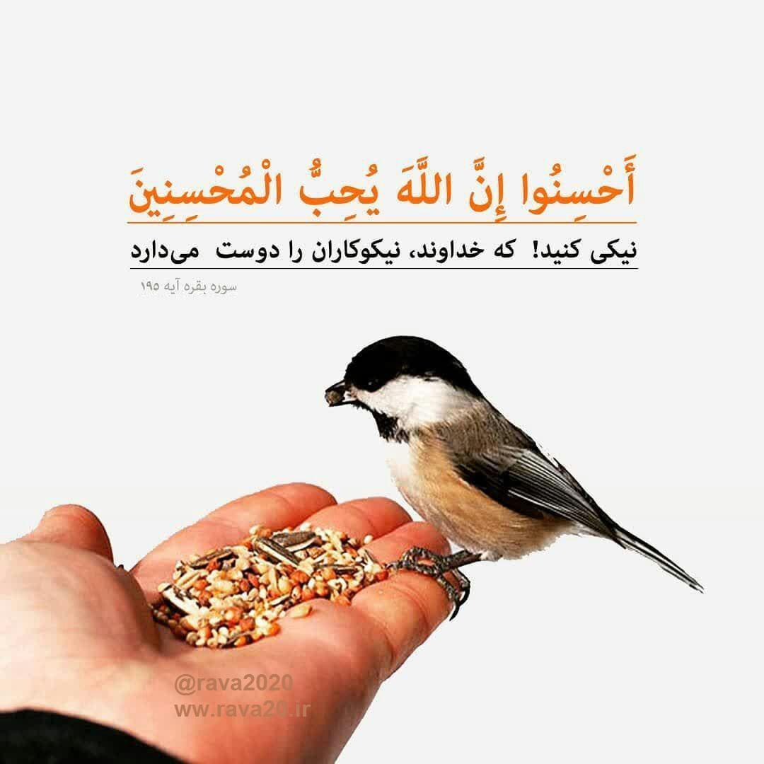 نیکی کنید