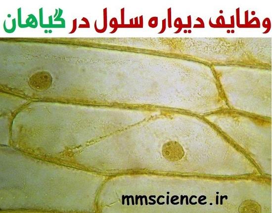 وظایف دیواره سلول در گیاهان