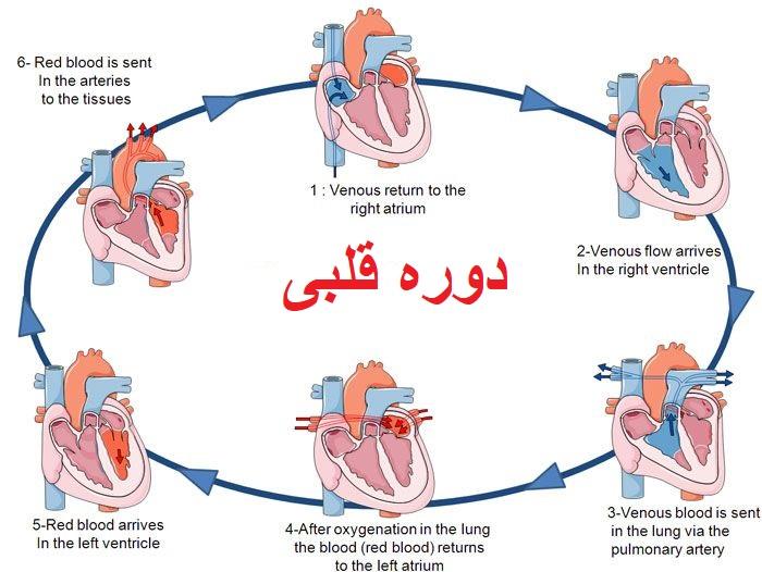 دوره قلبی زیست دهم