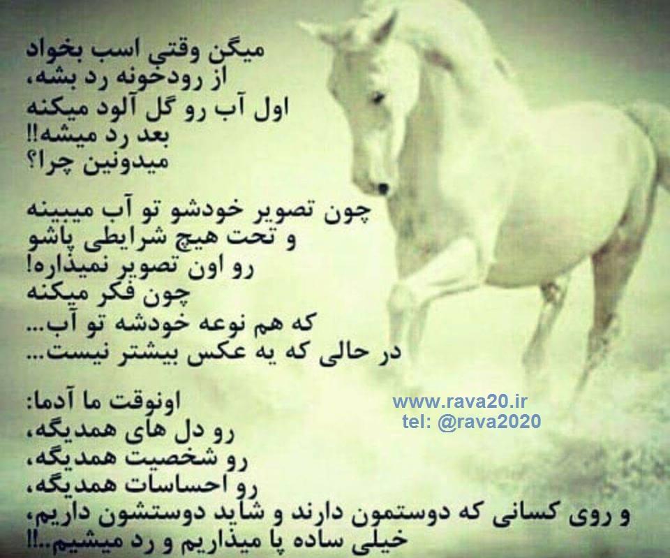 چرا اسب قبل از گذر از آب آن را گل آلود می کند!