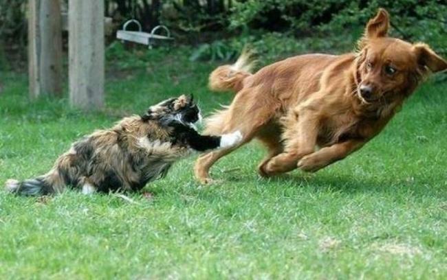 دعوای سگ ها و گربه ها گربه و سگ