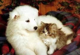 سگ و گربه باهم نگهدتری سگ و گربه باهم