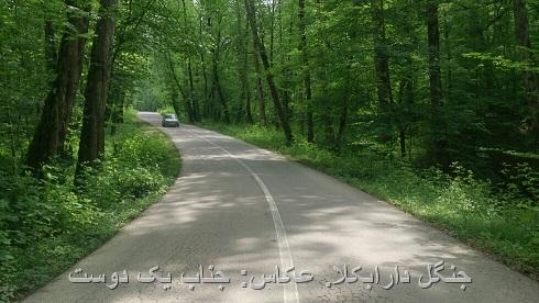 جنگل اردیبهشت 97 دارابکلا