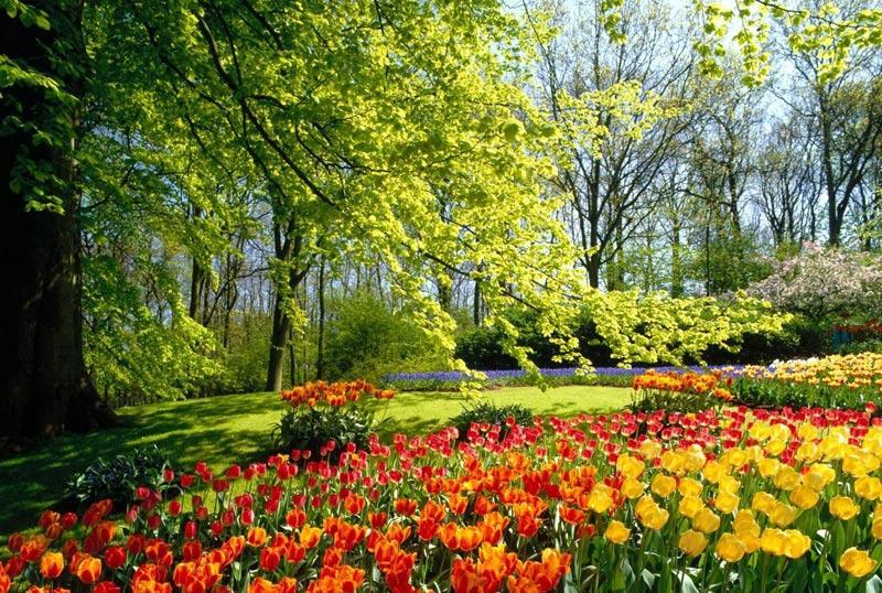 زیبایی بهار
