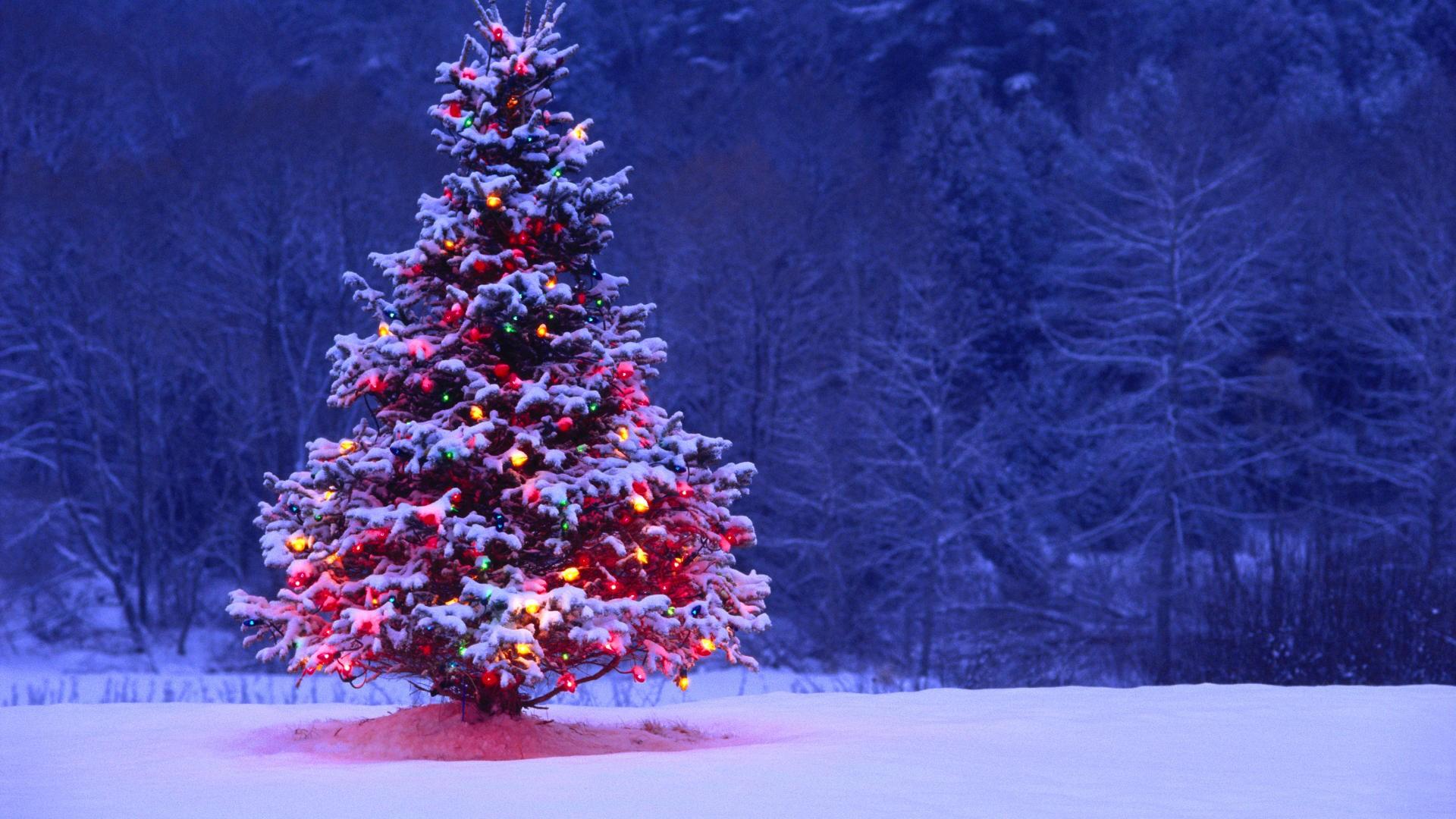 عکس درخت عید کریسمس