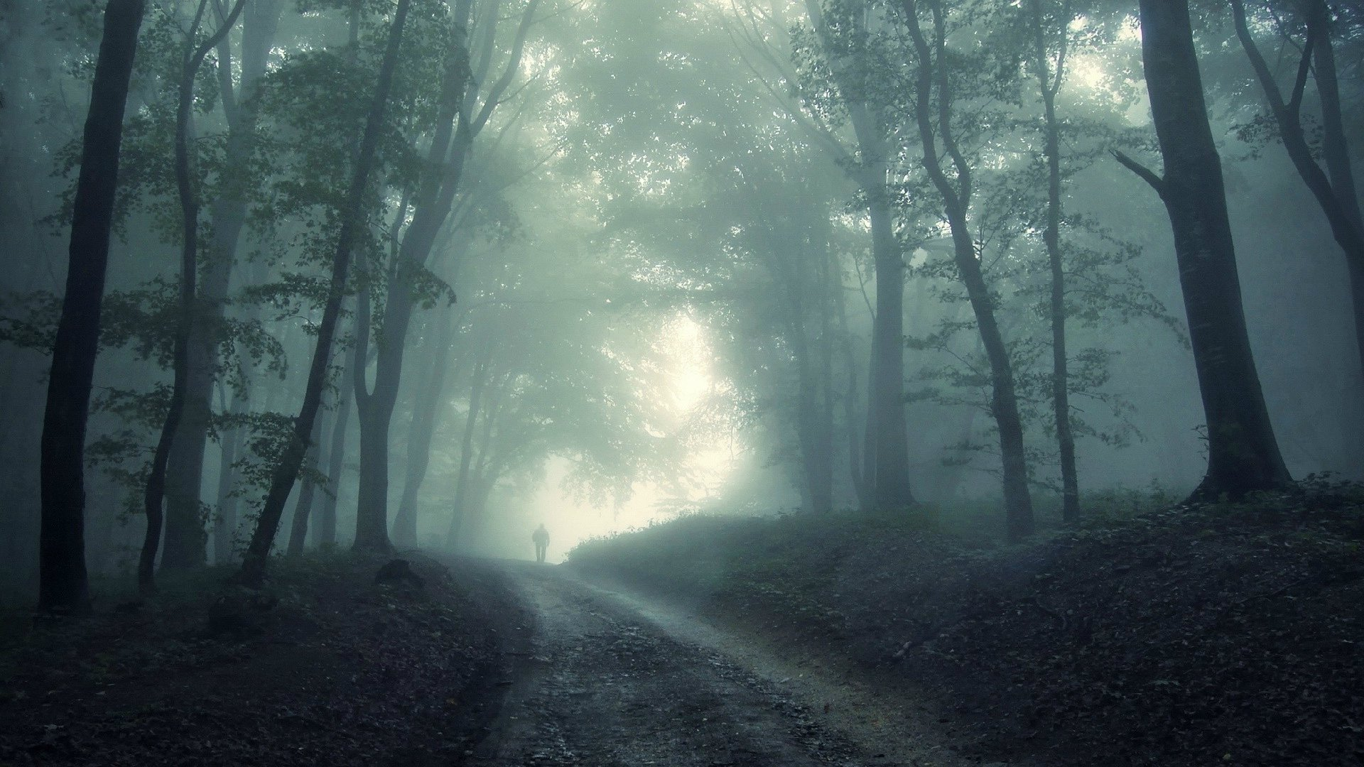 عکس جنگل خوشگل