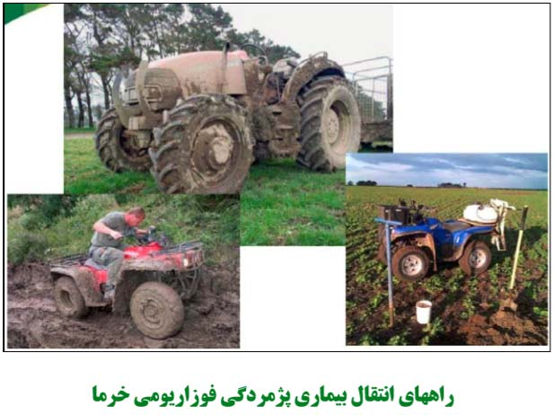 ادوات کشاورزی عامل انتقال بیماری پژمردگی فوزاریومی خرما به مناطق دوردست