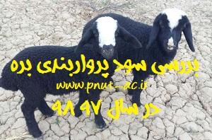 افزایش وزن بره با جیره اختصاصی و بررسی سود گوسفند در سال 97