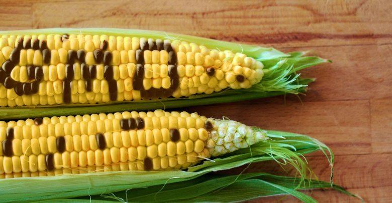 شرحی بر محصولات تراریخته : از کتاب   انقلاب غذایی  از جان رابینز