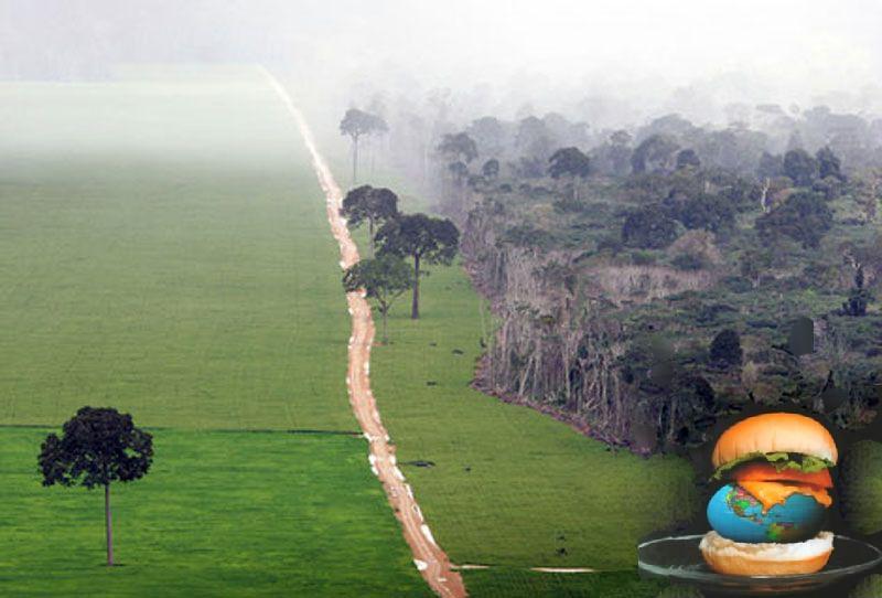 تولید گوشت ، منابع طبیعی جهان را نابود میکند