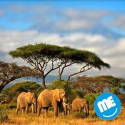 سفر به قلب حیات وحش آفریقا