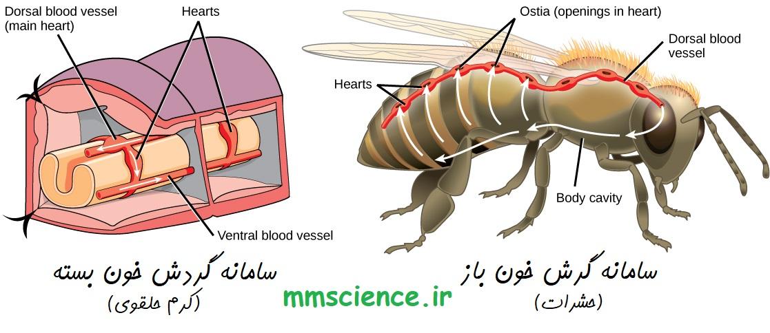 مقایسه گردش خون باز و گردش خون بسته