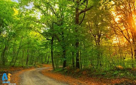 جنگل بلگراد استانبول-الفبای سفر