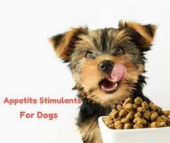 غذاي تشويقي سگ فوايد غذاي تشويقي سگ